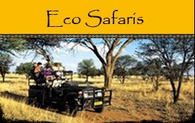 Eco Safaris